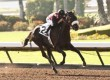 Soi Phet Stretches Out in Cougar II