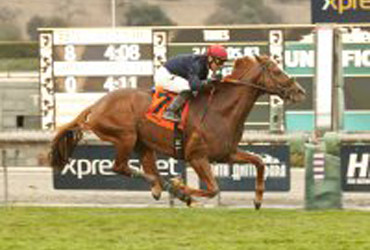 Lakerville to Stand at Harris Farms