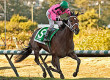 Alert Bay Shoots for Zia Derby