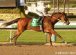 San Onofre in Los Angeles Stakes