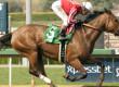 Wild in the Saddle in Fran's Valentine