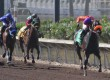 Tribal Gal Repeats in Oak Tree Distaff