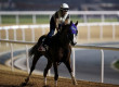'Chrome Targeting Dubai Return