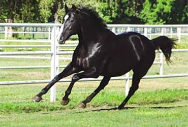 Unusual Heat Progeny Surpass $50 Million