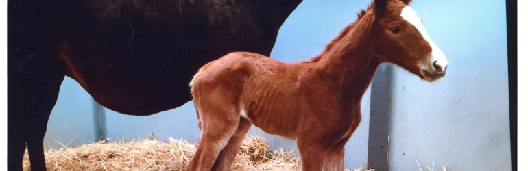 Lakerville has First Foal
