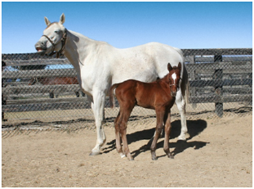He Be Fire N Ice's First Foals Arrive