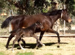 Indian Gods has First Foal