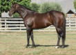 Informed Gets First Stakes Winner