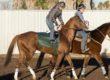 China Horse Club Buys 'Chrome Share