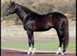 Stallion Stormin Fever Pensioned