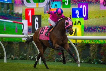 Ashleyluvssugar Loves Winning Stakes
