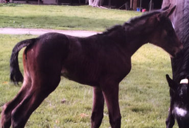 Circumference has First Foal
