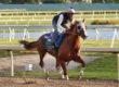 'Chrome Works at Gulfstream Park