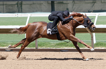 NorCal Grad Filly Sells for $360,000