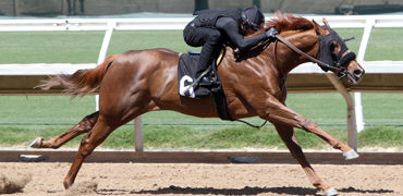 Cal-bred Filly Sizzles in Preview