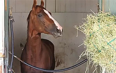 California Chrome to Shuttle to Chile