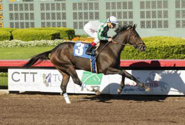 Sircat Sally Perfect in Hand-Ride Win