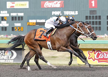 NorCal Sale Grad in Governor's Cup