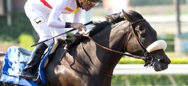 Bertrando Draws Multiple Stakes Winners