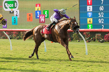 California Chrome's Sister Gets First Win