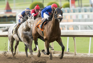Cal-bred Duo in Comma to the Top