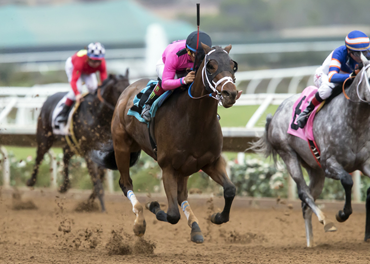 Solid Wager Seeks Cary Grant Three-peat