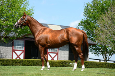 'Chrome Season Donated for Fire Relief