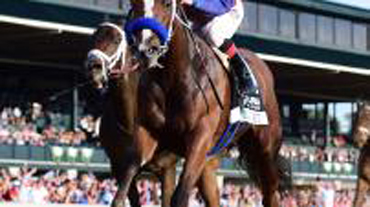 Miss Sunset in Filly & Mare Turf Sprint