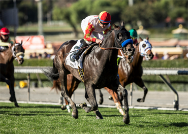 Stakes-winning Trio in Cal Cup Derby