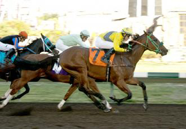 Tribal Storm in Lost in the Fog Stakes