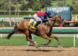 Miss Sunset Leads Cal-bred C.E.R.F. Sweep