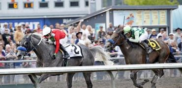 Back-to-back Stakes for Reginella